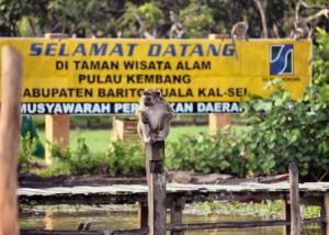 pulau kembang wisatabanjarmasin.com
